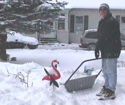 Picture of Cyndy clearing snow in Lancaster, NH with a pink flamingo looking on.